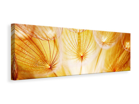 Panoramic Canvas Print Close Up Dandelion In Light