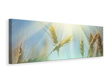Panoramic Canvas Print King Of Cereals