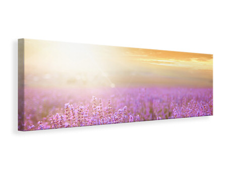 Panoramic Canvas Print Sunset In Lavender Field