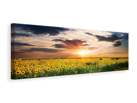 Panoramic Canvas Print A Field Of Sunflowers