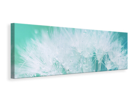 Panoramic Canvas Print Close Up Dandelion In Morning Dew
