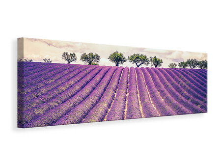 Panoramic Canvas Print The Lavender Field