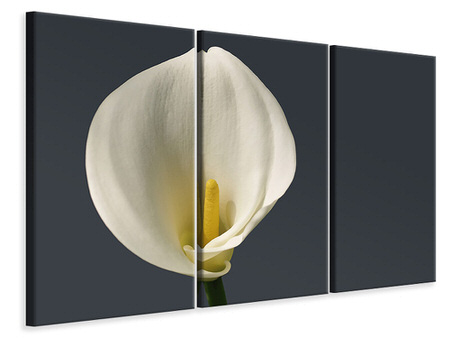 3 Piece Canvas Print Proud Calla