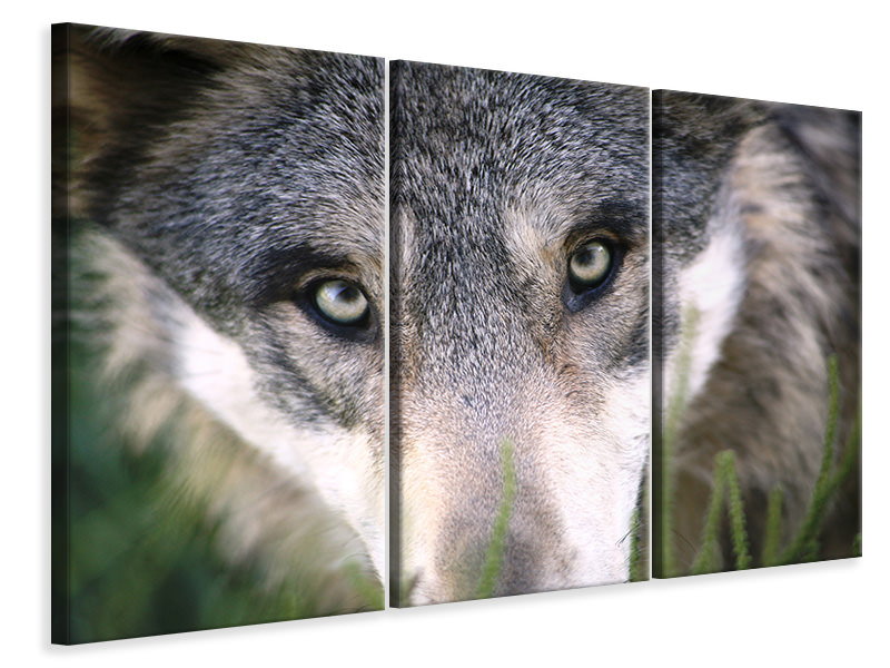 3 Piece Canvas Print The Wolf's look