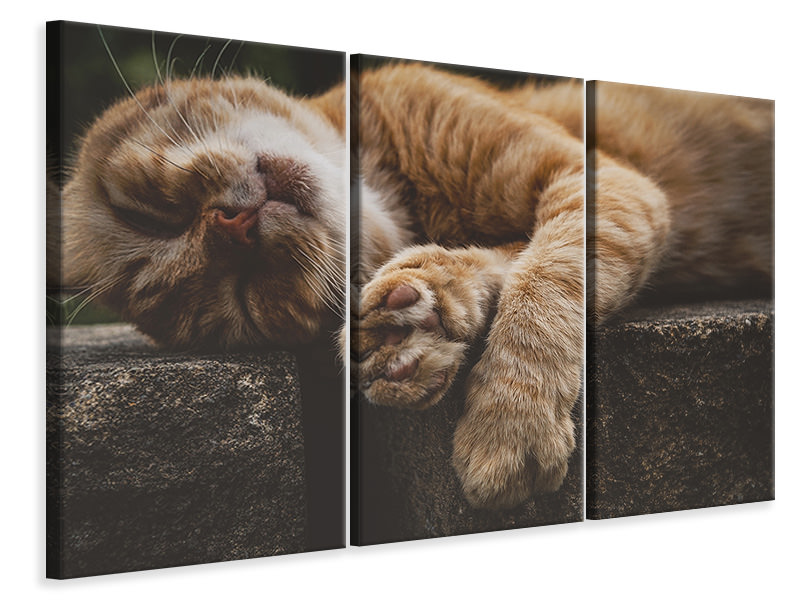 3 Piece Canvas Print Sleeping cat