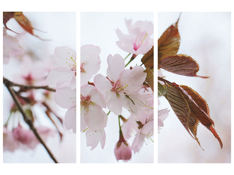 3 Piece Canvas Print Lovely Japanese cherry
