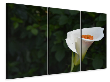3 Piece Canvas Print XL Calla in white