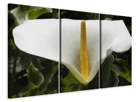 3 Piece Canvas Print Macro calla in white