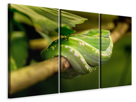 3 Piece Canvas Print Green snake