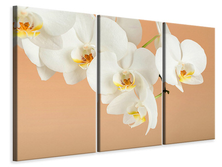 3 Piece Canvas Print White Orchid Flowers