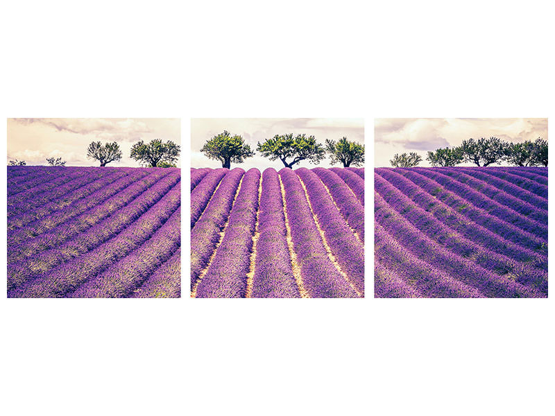 Panoramic 3 Piece Canvas Print The Lavender Field