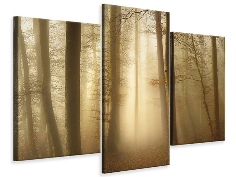 Modern 3 Piece Canvas Print Into The Trees
