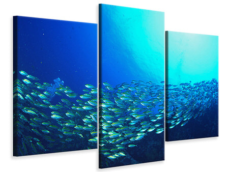 Modern 3 Piece Canvas Print Shoal Of Fish