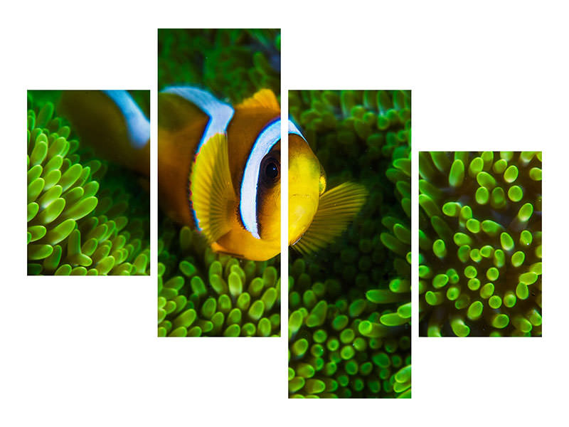 Modern 4 Piece Canvas Print Yellow Clownfish On Green Anemon