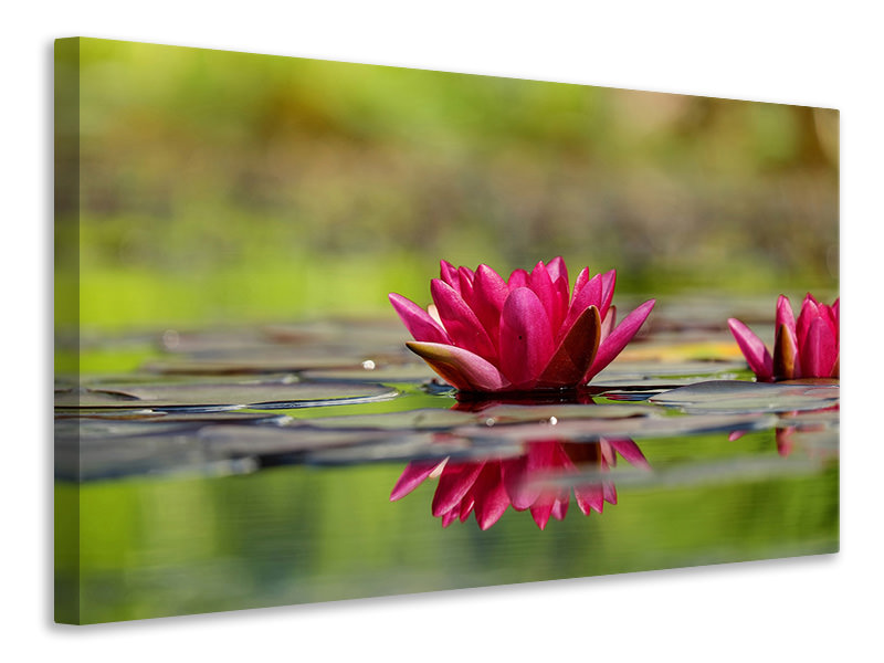 Canvas print Red water lily duo