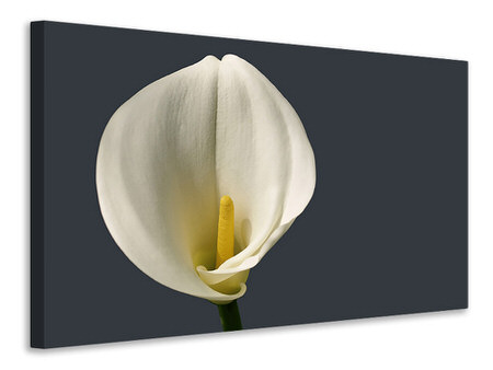 Canvas print Proud Calla
