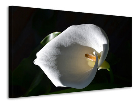 Canvas print Wonderful calla