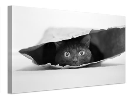 Leinwandbild Cat in a bag