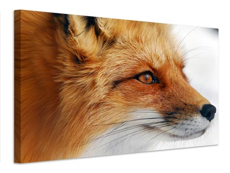 Leinwandbild Red Fox