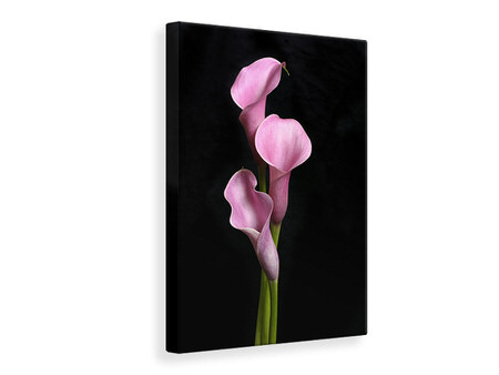 Canvas print 3 Purple Callas