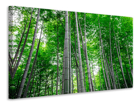 Canvas print Bamboo Forest