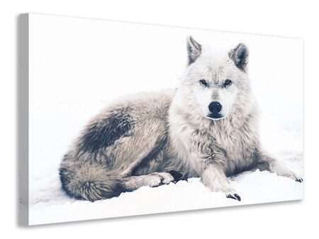 Canvas print The Wolf